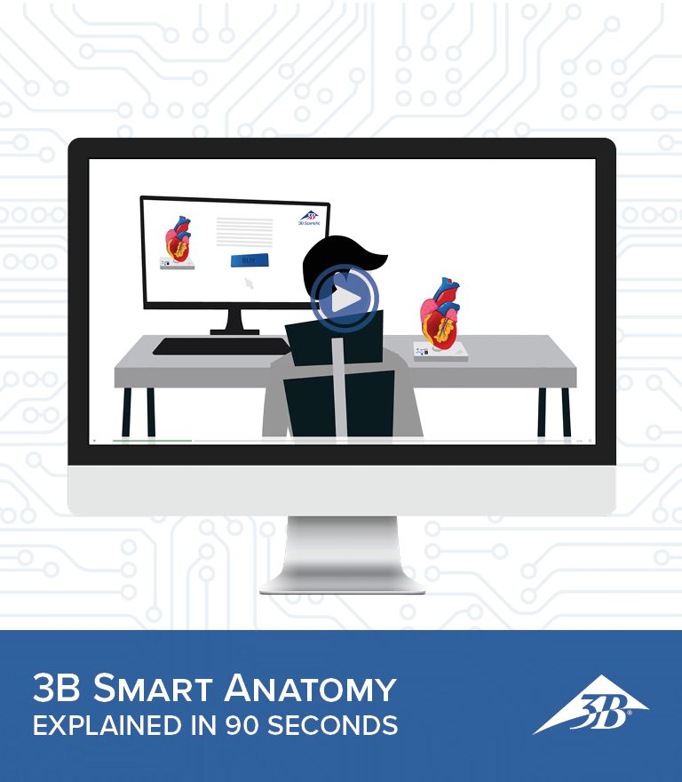 3B Scientific presents 3B SMART ANATOMY