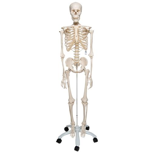 A10: Skeleton Model - Stan