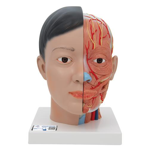 C06: Asian Deluxe Head with Neck, 4 part