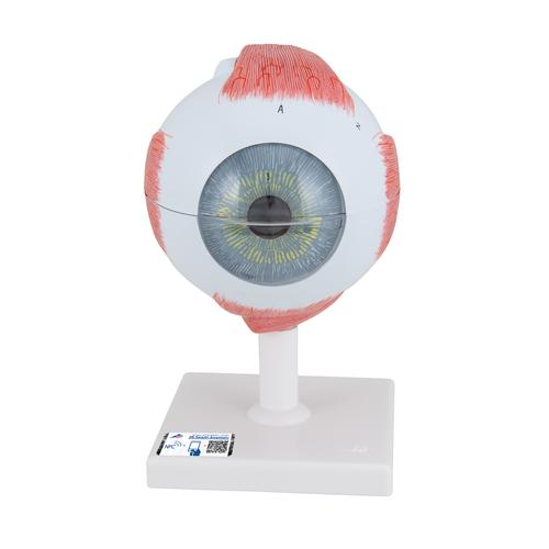 F10: Eye, 5 times full-size, 6 part