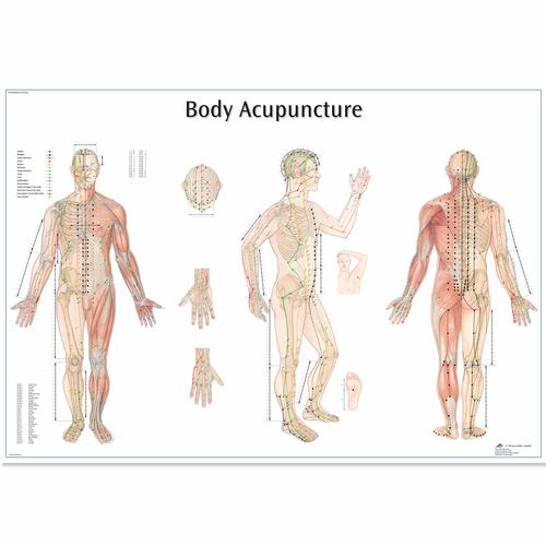 Body Acupuncture Chart, 4006730 [VR1820UU], Acupuncture Charts and Models