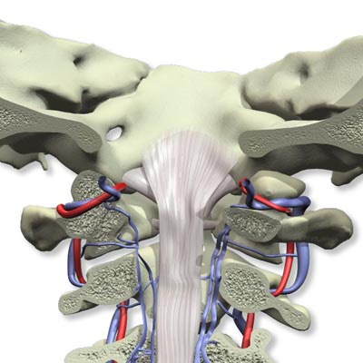 W46671: 3D Anatomy for Chiropractic DVD-ROM 3