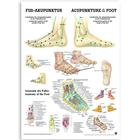 Acupuncture of the Foot (German/English)&#x3b; paper version, 50 x 70 cm, 1003629, Acupuncture Carts