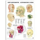 Acupuncture of the Head (German/English); laminated deluxe version, 50 x 70 cm, 1003630, Acupuncture Charts and Models