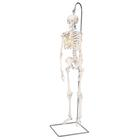 Mini Human Skeleton - Shorty - on hanging stand,A18/1