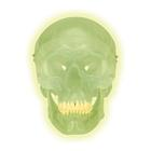 Glow in the Dark Skull Model, 1020163 [A20/N], Human Skull Models
