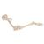Human Leg Skeleton Model with Hip Bone - 3B Smart Anatomy, 1019366 [A36], Leg and Foot Skeleton Models (Small)