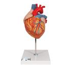 Heart, 2-times life size, 4 part, 1000268 [G12], Heart Health and Fitness Education