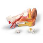 MEDart™ Ear,MAE10