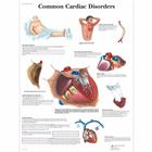 Common Cardiac Disorders Chart, 4006680 [VR1343UU], Heart Health and Fitness Education