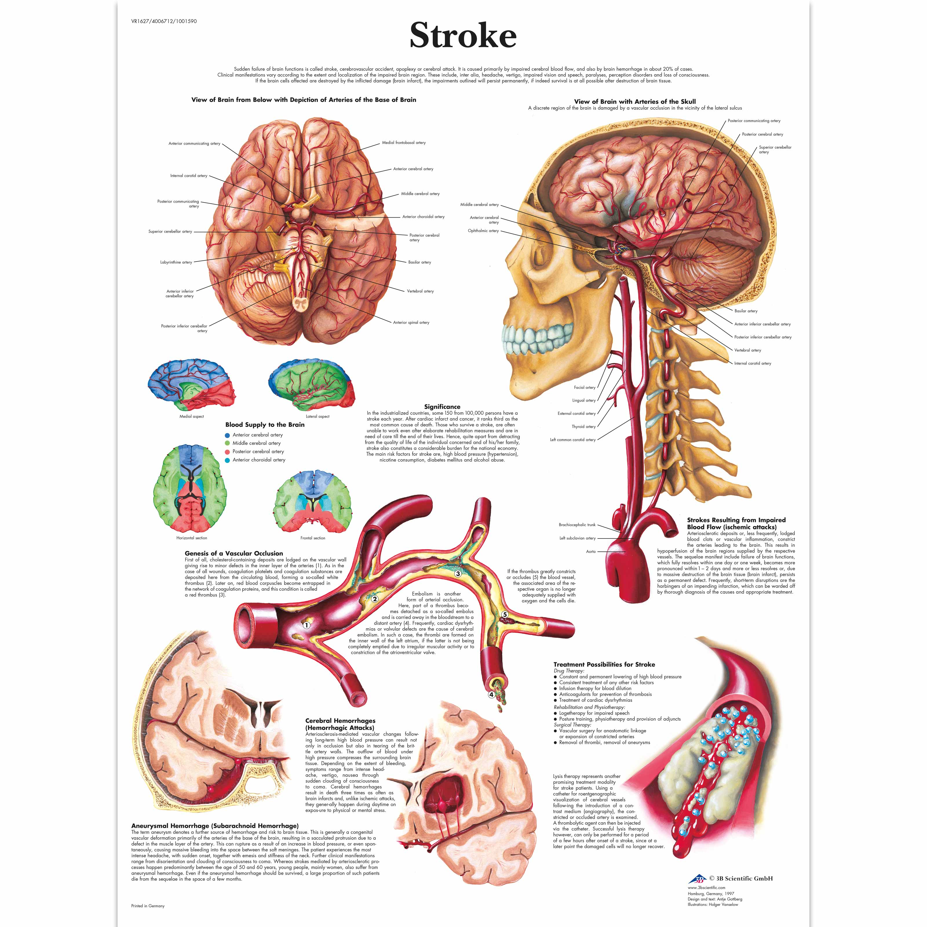 anatomy of the brain essay Anatomy and physiology: the 3d human brain  an essay about phantom limb pain in science creative quarterly learn more about the senses with anatomy & physiology, .