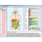 Feeding organs and metabolism in the human body, Interactive CD-ROM,W13506
