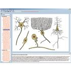Nervous system and transmission of information Part I, Interactive CD-ROM,W13511