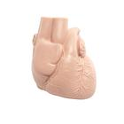Replacement heart for patient care training manikin,XP031
